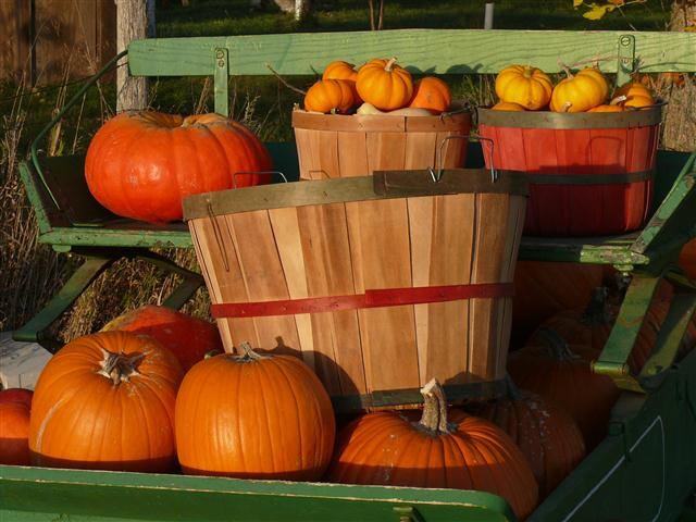 Pumpkins in baskets on the wagon seat.