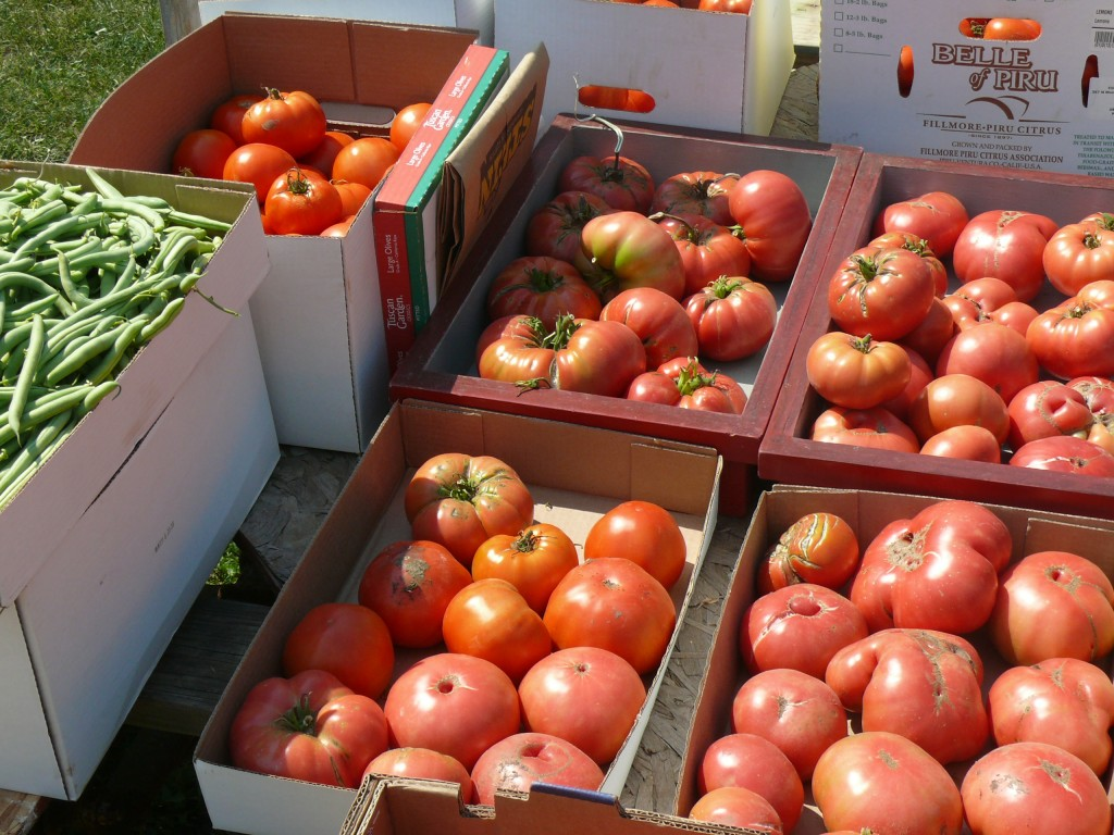 Several varieties of tomatoes in boxes.